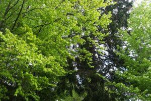 Biodanza v naravi
